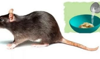 3-HOME-METHODS-TO-GET-RID-OF-RATS