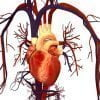 Human_Heart_and_Circulatory_Syst