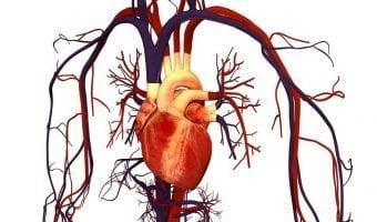 Human_Heart_and_Circulatory_Syst